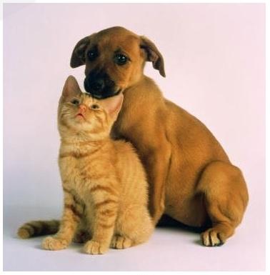 cat-dog-20_1(5386).jpg