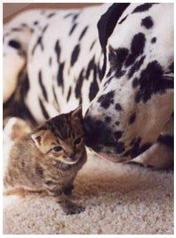 cat-dog-30_1(4527).jpg